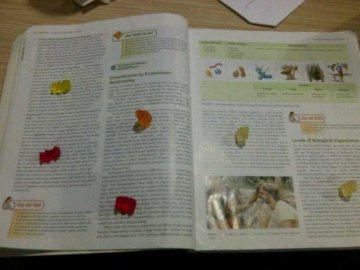 gummy-bears-study-text-book